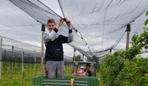 Witterung bedroht die Ibiker Öpfel.